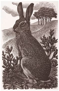 Charles Frederick #Tunnicliffe R.A.: Sitting #Hare, 1949, #Wood-#engraving #modernart #art #modern #wildlife #llfa Blackwork, Hare, The Twenties, Cats And Kittens, Art Gallery, Art Museum, Fine Art Gallery, Bunny, Rabbit