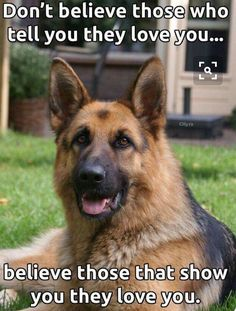 German Shepards are the greatest dogs!!!