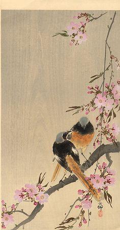 "Koson Ohara ""Shoson"" (1877-1945)   Redstart on Cherry Branch, ca 1910."