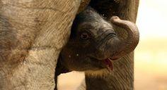 Edge Of The Plank: Cute Animals: Baby Elephants
