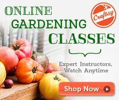 How To Plan And Medicinal Herb Garden