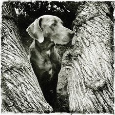✯✯✯✯        Blogs - Tyson Kilmer's Dogz Life
