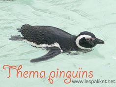 Ideeën voor het thema pinguins - Lespakket