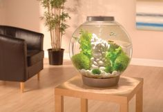 biOrb 60 by Reef One. A more attractive fish tank. Seahorse Aquarium, Biorb, Betta Fish Care, Water Plants, Aquariums, Animals For Kids, House Plants, Home Improvement, Creatures