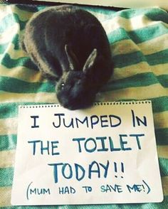 Oh no! What a fiasco! #rabbit #bunny #cuteanimals #pets #bunnies