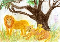 Waldorf ~ 4th grade ~ Human & Animal ~ Lion Family ~ main lesson book
