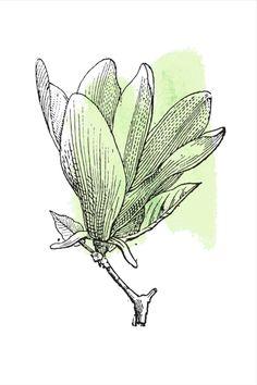 Green Plants, Cactus Plants, Colorful Wall Art, All Print, Decoration, Watercolor Art, Wall Art Prints, Wall Decor, Pottery