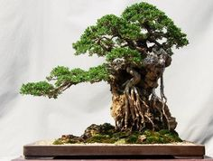 Image from http://cdn.homesthetics.net/wp-content/uploads/2014/11/The-Most-Beautiful-And-Unique-Bonsai-Trees-In-The-World-homesthetics-1.jpg.