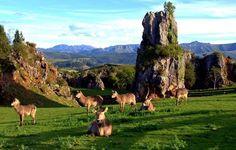 """""""@_Paisajes_: Parque de la Naturaleza de #Cabarceno #Cantabria pic.twitter.com/gqE9YdJ1Zk"""""""