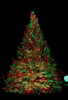 Christmas Lights Beautiful Christmas Lights On A Gigantic Christmas Tree ! Christmas Lights Outside, Beautiful Christmas Trees, Holiday Lights, Outdoor Christmas, Trees Beautiful, Beautiful Lights, Christmas Scenes, Noel Christmas, Winter Christmas