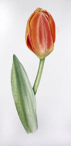 Sketchbook | GMK Natural Cabinets, Botanical Art, Nature, Naturaleza, Nature Illustration, Off Grid, Natural