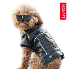 Doggy with style!!!!