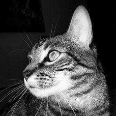 """Gra en Twitter: """"Rayo. #cat #caturday #gato Un día, un gato http://t.co/2P579oZFUx http://t.co/RHUrX8fa5A"""""""
