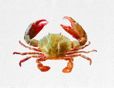 Crab  Watercolor Painting Art Print Sea Life watercolor orange white grey beige Home Decor  Wall Decor Kitchen Decor Beach Decor                                                                                                                                                                                 More