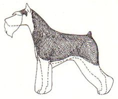 ... lines that should be followed in shaping the legs, underline and head, giant schnauzer