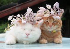やまうるいの花 |のせ猫オフィシャルブログ Powered by Ameba