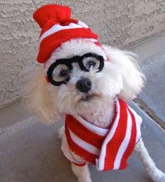 Last Minute DIY Halloween Costumes for Your Dog | Broke-Ass Stuart's Goddamn Website