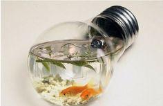 Light bulb fish tank--centerpiece [rustic wedding]