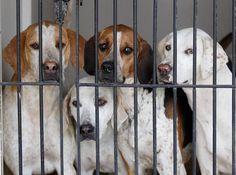 Teneri cuccioli Notizie: Se adotti un cane non paghi le tasse comunali/LEGG...