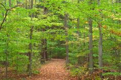 Image detail for -... Trail in Sapsucker Woods Sanctuary. Ithaca, New York, October 20, 2005