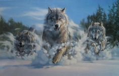 Wolf Photos, Wolf Pictures, Beautiful Wolves, Animals Beautiful, Wolf Artwork, Wolf Spirit Animal, Wolf Love, Wild Wolf, Anime Wolf