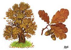 Расскажите детям о деревьях и кустах. Autumn Activities For Kids, Clay Pot Crafts, Autumn Forest, Clay Pots, Trees To Plant, Fall, Nature, Flowers, Montessori