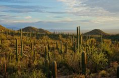 Late afternoon light in Saguaro National Park West - http://rvhappyhour.com/groups/photography/gallery/saguaro-national-park/
