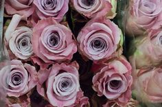 Faith roses at New Covent Garden Flower Market - August 2015 Wedding Flower Packages, Diy Wedding Flowers, Diy Flowers, Floral Wedding, Faith Rose, New Covent Garden Market, Lilac Roses, Flower Packaging, Flower Market