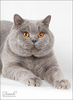 wow,,,,OUAAAH  GROS  BEAU  MATOU,,,,**+ Beautiful kitty!