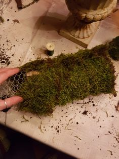Et alternativt juletre som ikke drysser.   SkarpiHagen How To Dry Basil, Herbs, Food, Alternative, Essen, Herb, Meals, Yemek, Eten