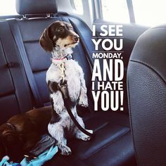 """11 Likes, 2 Comments - Dachshund Quotes & Pictures (@mydachshundfamily) on Instagram: """"Go away Monday . @shantiandpoe"""""""