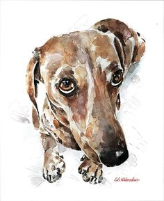 Dachshund  Print Watercolour A3 2016 inches by EdsWatercolours