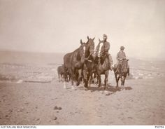 exercising horse - [PS0794 | Australian War Memorial] Ww1 Photos, Photographs, Lest We Forget, Military Police, Good Cause, Wwi, World War, Egypt, War Horses