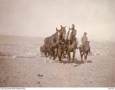 exercising horse - [PS0794 | Australian War Memorial]