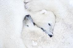 Esta preciosa foto corresponde a la fotografa Daisy Gilardini, Lugano Switzerland.