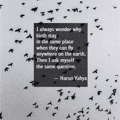 """I always wonder why birds stay in the same place when they can fly anywhere on the earth. Then I ask myself the same question."" 