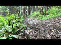 Freeride trať bachledova_HD.mpg - YouTube Trunks, Youtube, Plants, Drift Wood, Tree Trunks, Plant, Youtubers, Youtube Movies, Planets