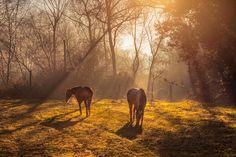 The light of freedom II... by João Almeida on 500px.... #Horses #Portugal