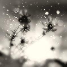 Tears in Autumn
