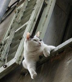 【画像】窓猫の居る風景を置いておきます:ハムスター速報