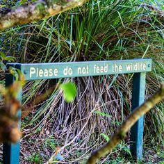 Protect them #dontfeedtheanimals #igersbrisbane #igersaustralia #canon60d #leaves #green #nature #forest #Brisbane #Australia