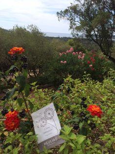Escale en Corse grâce à Marilyne, de Obiolyne. Ride Or Die, Corse
