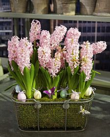 Spring Bulb Arrangement How-To 1. Begin by choosing a vessel for the arrangement, such as a wire basket. Line the basket with sheet moss. Add a layer of landscape fabric. 2. Remove flowering bulbs from their plastic containers. Repot bulbs in your chosen vessel. Add potting soil. Add gardening stakes, if necessary. Embellish.