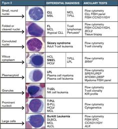 Lymphocytosis refers to an increase of peripheral blood lymphocytes, which for adults corresponds to lymphocytes/microL in most clinical laboratories (Approach to Lymphocytosis). Medical Lab Technician, Flow Cytometry, Medical Laboratory Scientist, Med Lab, Biomedical Science, Medical Technology, Energy Technology, Medical Coding, Technology Gadgets