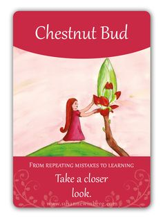Chestnut Bud - Bach Flower Oracle Card by Susanne Winberg. Message: Take a closer look. With the Bach Flower Oracle Cards you can work in a playful and intuitive way with the flower essences. Chestnut Bud, Bach Flowers, Switch Words, Reiki, Oracle Cards, Deck Of Cards, Flower Cards, Herbalism, Life Quotes