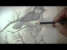 Tips on Drawing a Bird