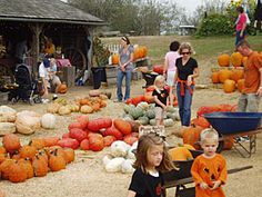 Select all you favorites for fall decoration-pumpkins, gourds, Indian corn, corn stalks, and straw bales, at Weston Red Barn Farm and Orchard, just north of Kansas City, Missouri