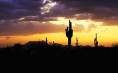 """In the Shadows of the Saguaro"" #sunset #Arizona #desert #southwest #saguarocactus #silhouettes"
