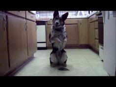 Il cane che ha stupito mezzo mondo - Guardalo