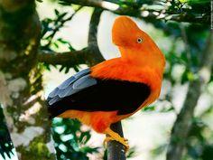 Happy Biological Diversity Day! Did you know that #Peru is one of the 17 nations members of the Group of Related Diverse Countries? This is because we have more than 25,000 #floral #species and 5,000 of #fauna.  // ¡Feliz Día Mundial de la Diversidad Biológica! ¿#SabíasQue el #Perú es una de las 17 naciones miembros del Grupo de Países Megadiversos Afines? Esto se debe a que contamos con más de 25,000 especies de #flora y 5,000 de #fauna.